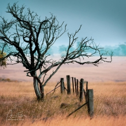 Blackened by Time | Clarkfield, Victoria