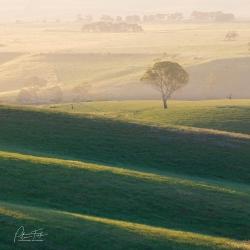 Grass Folds | Clarkfield, Victoria