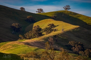 Natural Zed | Merton, Victoria