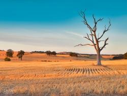 Field Guardian | Greenvale, Victoria