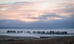 Row in Fog