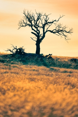 Scary Tree | Tooborac