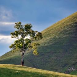 Above the Lee | Bonnie Doon, Victoria
