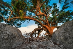 Tree Glow - Boulder Field | Nulla Vale
