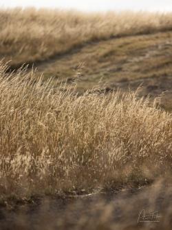 Grass Triangle | Darraweit, Victoria