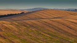 Hillside Crops