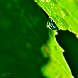 A Droplet of Sunshine | Jamieson, Victoria