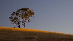Slice of Light | Darraweit, Victoria