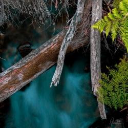 Still Creek | Eildon State Forest, Victoria
