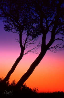Twins at Sunset | Mt Martha Beach, Victoria