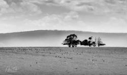 Seven Tree Hill