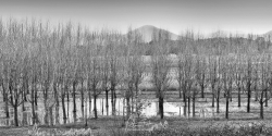 Yarra Valley Winter